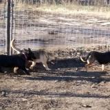 kutya-menhely-hajdú-bihar-hajdúszoboszló-kutyaorokbefogadas-2018.december-24