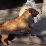 kutya-menhely-hajdú-bihar-hajdúszoboszló-kutyaorokbefogadas-2018.december-26