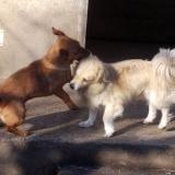 kutya-menhely-hajdú-bihar-hajdúszoboszló-kutyaorokbefogadas-2018.december-27