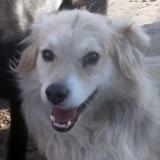 kutya-menhely-hajdú-bihar-hajdúszoboszló-kutyaorokbefogadas-2018.december-31