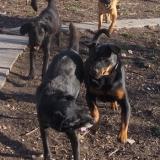 kutya-menhely-hajdú-bihar-hajdúszoboszló-kutyaorokbefogadas-2018.december-8