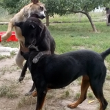 kutya-menhely-hajduszoboszlo-kutya-orokbefogadas-2018-julius-26