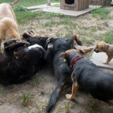 kutya-menhely-hajduszoboszlo-kutya-orokbefogadas-2018-julius-28