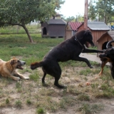 kutya-menhely-hajduszoboszlo-kutya-orokbefogadas-2018-julius-31