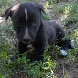 kutya-menhely-hajduszoboszlo-kutya-orokbefogadas-2018-julius-8