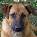 kutya-menhely-hajduszoboszlo-kutya-orokbefogadas-2018-junius-9