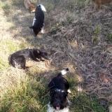 kutya-menhely-hajduszoboszlo-kutya-orokbefogadas-2018-majus-1