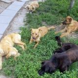 kutya-menhely-hajduszoboszlo-kutya-orokbefogadas-2018-majus-11