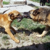 kutya-menhely-hajduszoboszlo-kutya-orokbefogadas-2018-majus-13