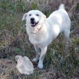 kutya-menhely-hajduszoboszlo-kutya-orokbefogadas-2018-majus-15