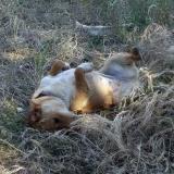 kutya-menhely-hajduszoboszlo-kutya-orokbefogadas-2018-majus-2