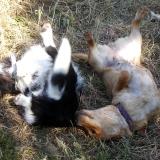 kutya-menhely-hajduszoboszlo-kutya-orokbefogadas-2018-majus-3