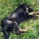 kutya-menhely-hajduszoboszlo-kutya-orokbefogadas-2018-majus-5