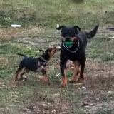 menhely-kutya-orokbefogadas-hajduszoszlo-2018-október-16