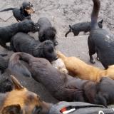 kutya-orokbefogadas-hajduszoszlo-2018-februar-1