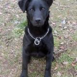 kutya-orokbefogadas-hajduszoszlo-2018-februar-11