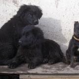 kutya-orokbefogadas-hajduszoszlo-2018-februar-15