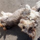 kutya-orokbefogadas-hajduszoszlo-2018-februar-18