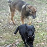 kutya-orokbefogadas-hajduszoszlo-2018-februar-6