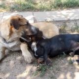 _menhely-kutya-orokbefogadas-hajduszoszlo-2018szeptember-16
