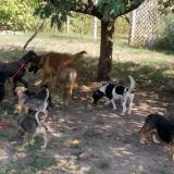 _menhely-kutya-orokbefogadas-hajduszoszlo-2018szeptember-32