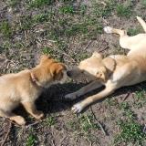 kutya-menhely-hajdú-bihar-hajdúszoboszló-kutyaorokbefogadas-2019.április-12