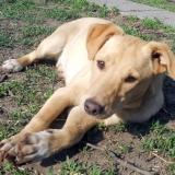 kutya-menhely-hajdú-bihar-hajdúszoboszló-kutyaorokbefogadas-2019.április-13