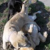 kutya-menhely-hajdú-bihar-hajdúszoboszló-kutyaorokbefogadas-2019.április-14