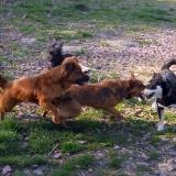 kutya-menhely-hajdú-bihar-hajdúszoboszló-kutyaorokbefogadas-2019.április-15