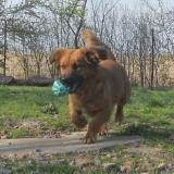 kutya-menhely-hajdú-bihar-hajdúszoboszló-kutyaorokbefogadas-2019.április-19