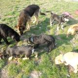 kutya-menhely-hajdú-bihar-hajdúszoboszló-kutyaorokbefogadas-2019.április-22
