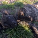 kutya-menhely-hajdú-bihar-hajdúszoboszló-kutyaorokbefogadas-2019.április-28