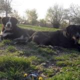 kutya-menhely-hajdú-bihar-hajdúszoboszló-kutyaorokbefogadas-2019.április-29
