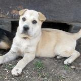 kutya-menhely-hajdú-bihar-hajdúszoboszló-kutyaorokbefogadas-2019.április-3