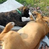 kutya-menhely-hajdú-bihar-hajdúszoboszló-kutyaorokbefogadas-2019.április-31