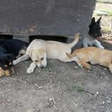 kutya-menhely-hajdú-bihar-hajdúszoboszló-kutyaorokbefogadas-2019.április-4