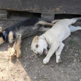 kutya-menhely-hajdú-bihar-hajdúszoboszló-kutyaorokbefogadas-2019.április-5