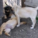 kutya-menhely-hajdú-bihar-hajdúszoboszló-kutyaorokbefogadas-2019.április-6