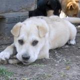kutya-menhely-hajdú-bihar-hajdúszoboszló-kutyaorokbefogadas-2019.április-7