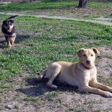 kutya-menhely-hajdú-bihar-hajdúszoboszló-kutyaorokbefogadas-2019.április-9