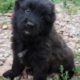kutya-menhely-gazdit-keres-hajdú-bihar-hajdúszoboszló-kutya-orokbefogadas-2019-augusztus-11