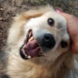 kutya-menhely-gazdit-keres-hajdú-bihar-hajdúszoboszló-kutya-orokbefogadas-2019-augusztus-12