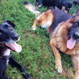 kutya-menhely-gazdit-keres-hajdú-bihar-hajdúszoboszló-kutya-orokbefogadas-2019-augusztus-17