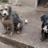 kutya-menhely-gazdit-keres-hajdú-bihar-hajdúszoboszló-kutya-orokbefogadas-2019-augusztus-18