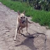 kutya-menhely-gazdit-keres-hajdú-bihar-hajdúszoboszló-kutya-orokbefogadas-2019-augusztus-2