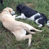kutya-menhely-gazdit-keres-hajdú-bihar-hajdúszoboszló-kutya-orokbefogadas-2019-augusztus-27