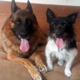 kutya-menhely-gazdit-keres-hajdú-bihar-hajdúszoboszló-kutya-orokbefogadas-2019-augusztus-29