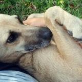 kutya-menhely-gazdit-keres-hajdú-bihar-hajdúszoboszló-kutya-orokbefogadas-2019-augusztus-3