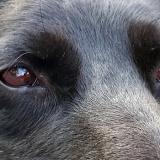 kutya-menhely-gazdit-keres-hajdú-bihar-hajdúszoboszló-kutya-orokbefogadas-2019-augusztus-32