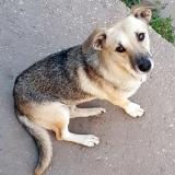 kutya-menhely-gazdit-keres-hajdú-bihar-hajdúszoboszló-kutya-orokbefogadas-2019-augusztus-6